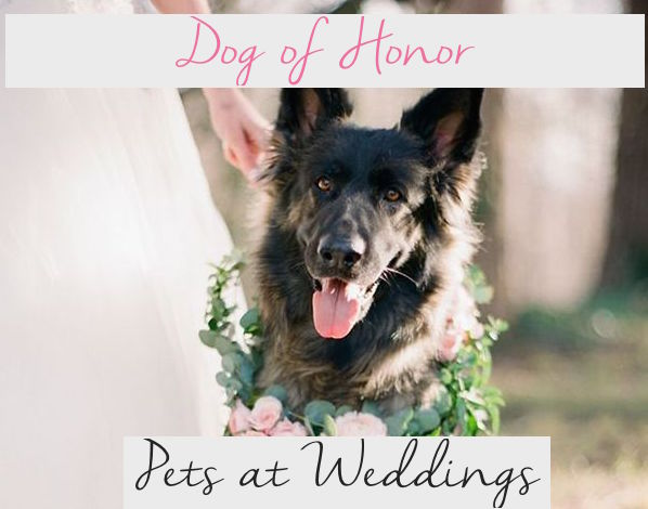 Dog of Honor: Pets at Weddings   Ideas on Including the Furry member of the Family on the Big Day   Occasions By M&K